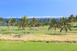 Hawaii Palm Grove poster