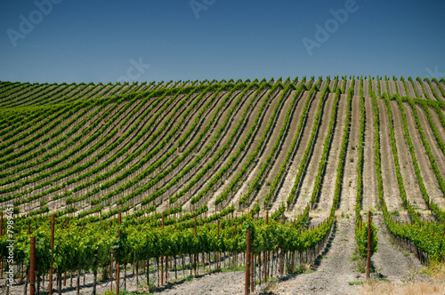 vineyards of napa valley, usa