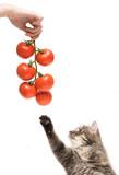 Vegetarian kitten poster