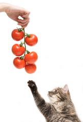 Vegetarian kitten