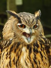 Happy Owl.