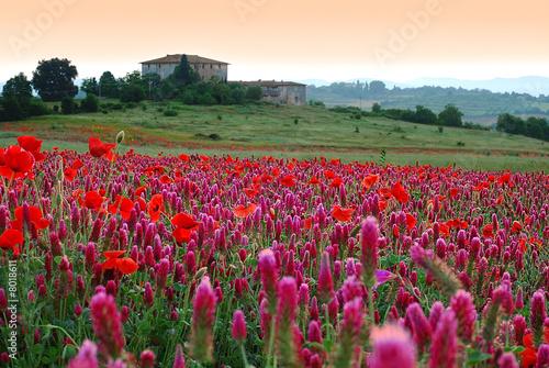 champs d'été toscan