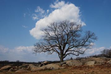 Devil's Den Gettysburg Tree