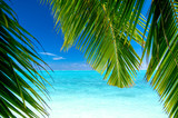 Strand mit Palmen - 8048441