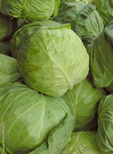 early cabbages