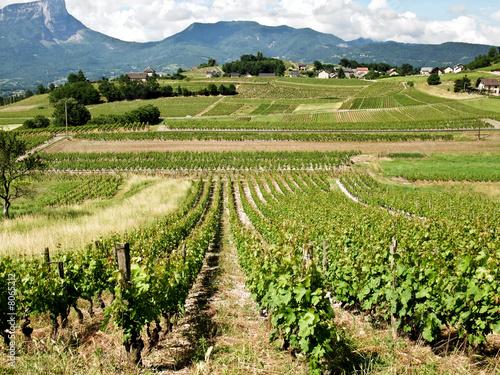 Vignes à Chignin en Savoie