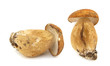 Porcini boletus edulis isolated on white background