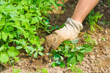 Weeding garden poster