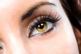 Fototapety The macro female eye
