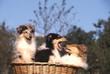 chiens panier qui baillent