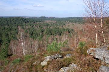 Forêt des Trois Pignons vue du Rocher de la Tortue