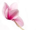 Fototapete Schönheit - Blühen - Blume