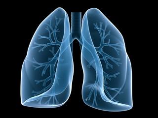menschliche lunge mit bronchien