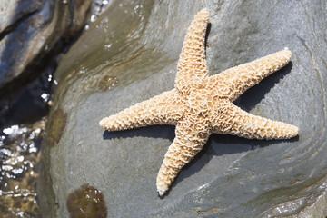 A starfish lying on a rock