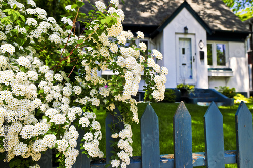 Fotobehang Tuin Blue fence with white flowers