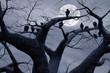 roleta: Spooky Vultures