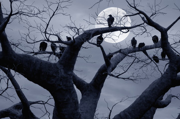 Spooky Vultures