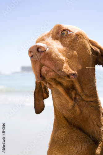 A dog on the beach