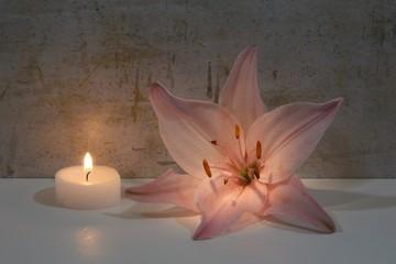 Rosa Lilie und Kerze