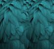 canvas print picture - Aqua Feathers