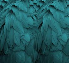 De Aqua Feathers