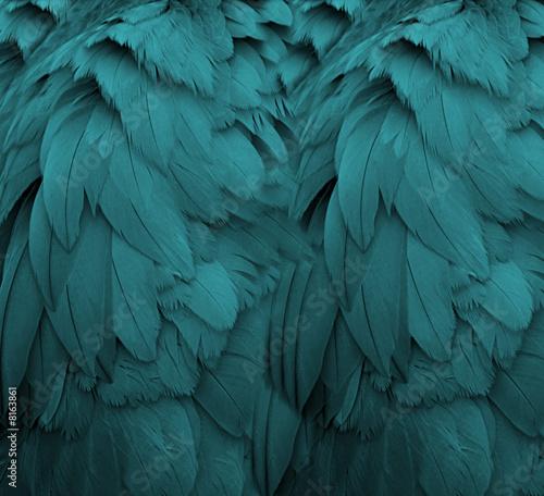 canvas print picture Aqua Feathers