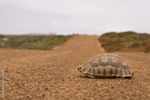 Tortoise on dirt road, ground view