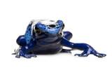 Fototapete Dendrobates - Tier - Reptilien / Amphibien
