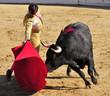 Matador & Bull - 8182658