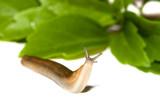 Garden Slug poster