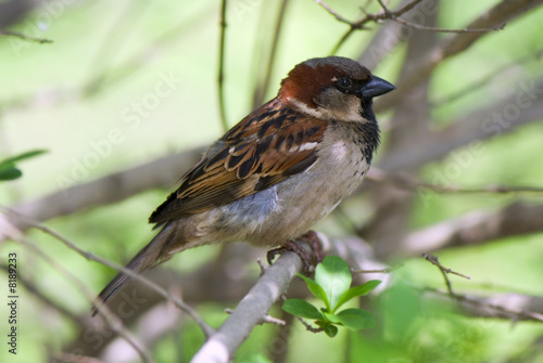 sparrow resting on a sprig