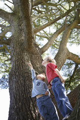 Two boys (3-6) looking up at tall tree, one boy pointing, smiling, low angle view