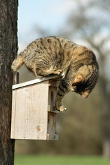 Katze auf Starenkasten