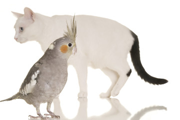 Cat and Bird Story