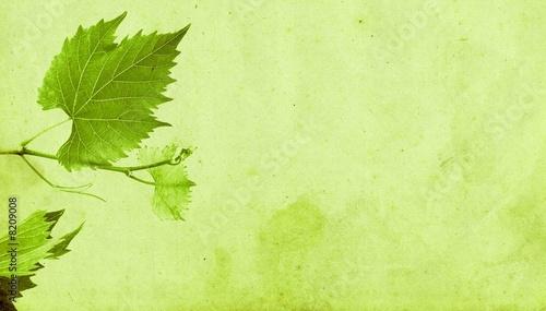 Foto op Plexiglas Wijngaard feuilles de vigne en été