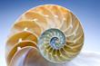 Leinwandbild Motiv Nautilus