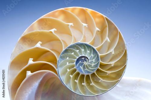 Nautilus - 8215431