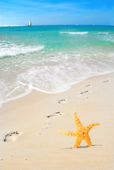 Starfish and Footprints on Beach