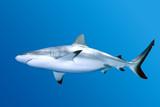 Fototapete Blau - Hintergrund - Fische