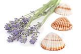 muschel und lila lavendel poster