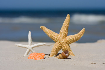 Starfish an seashell