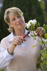 Mature woman pruning bush, close-up