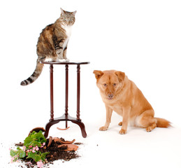 Cat and Dog troublemakers