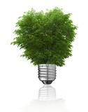 Fototapeta koncepcja - zielony - Drzewo
