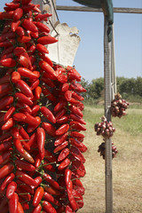 Red Chili Pepper drying