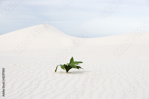 A plant in the desert