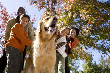 Family walking golden retriever in autumn park, smiling, low angle view, portrait