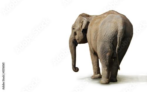 Foto op Aluminium Ezel éléphant