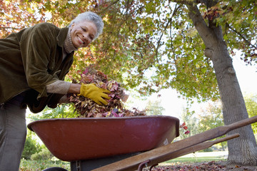 Senior woman collecting autumn leaves in wheelbarrow in garden, smiling, low angle view, portrait