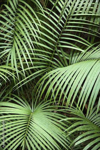 Tropical plant. - 8326841